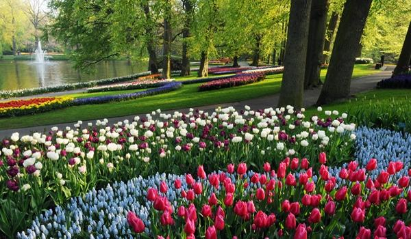tulipanes holandeses-19