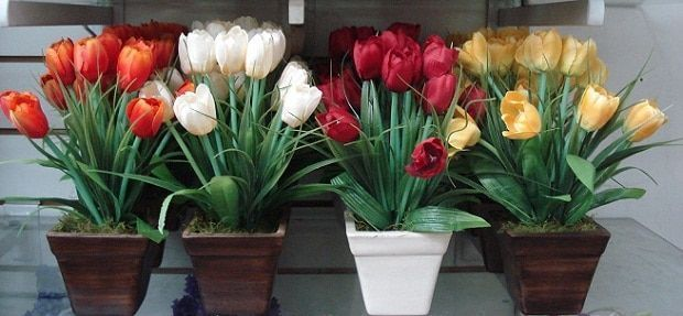 tulipanes holandeses-18